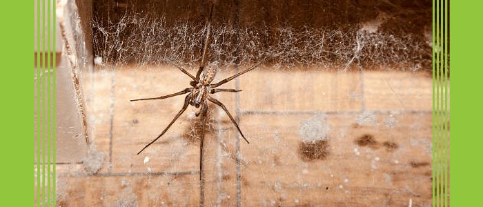 Emergency Spider Control Service