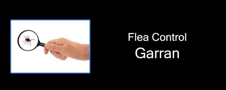 Flea Control Garran
